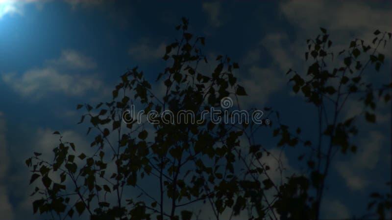 100f 2 8 28 velvia лета nikon s fujichrome пленки f вечера камеры 301 ai сток-видео