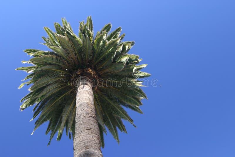 f11 Palm tree at Hotel del Coronado royalty free stock images