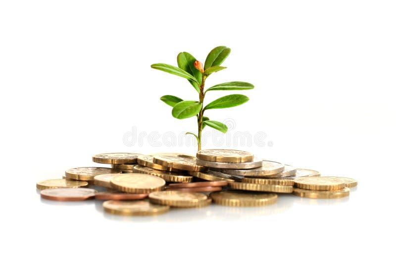 Faça o conceito do dinheiro. imagens de stock royalty free