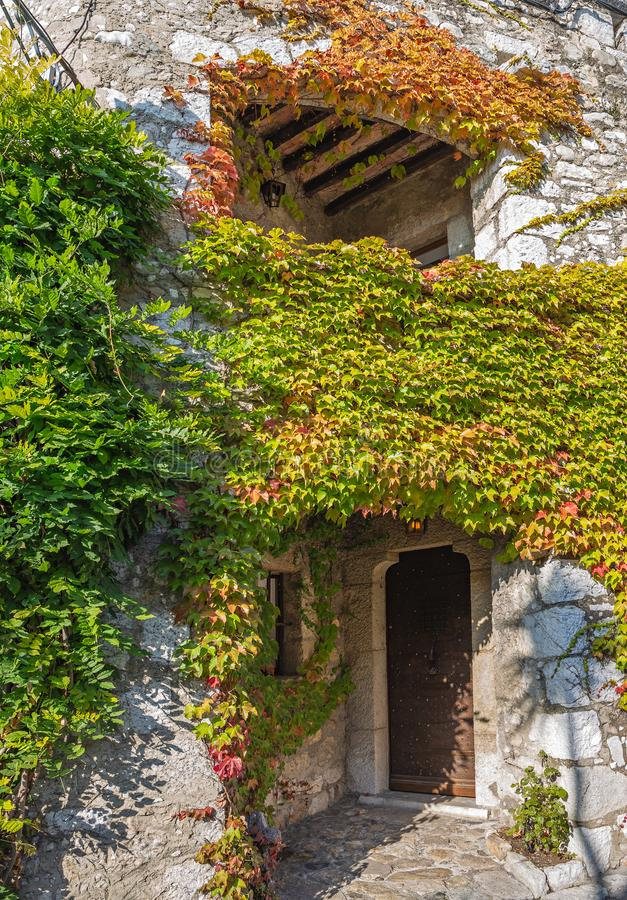 façade d'une vieille maison en pierre envahie avec le lierre photos libres de droits