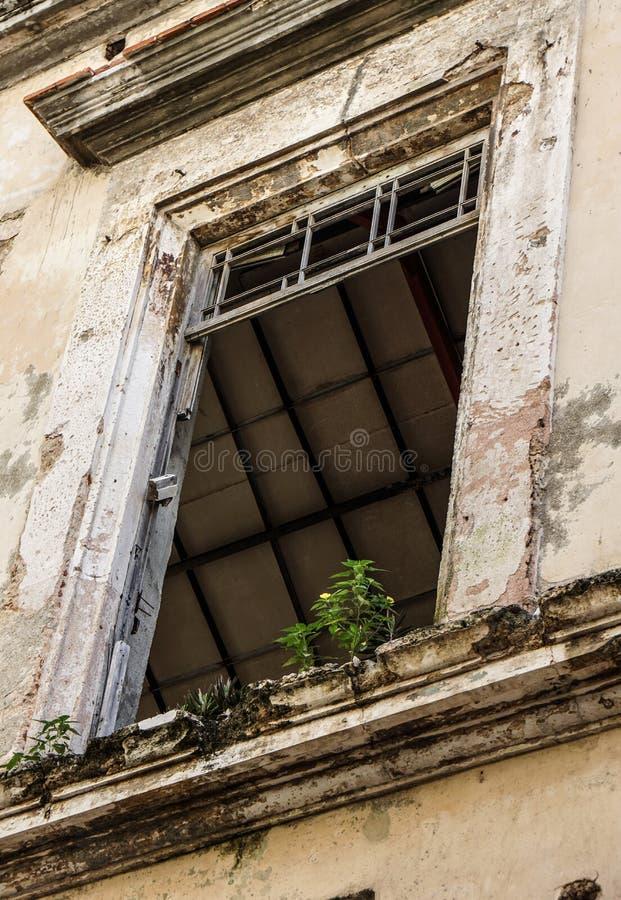 Façade de taudis avec l'élevage de fenêtre et de plante verte photographie stock