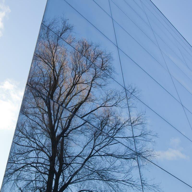 Façade en verre et réflexion des arbres photo libre de droits