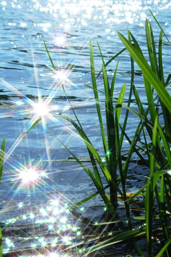 Download Faísca Da Luz De Sun Na Onda Imagem de Stock - Imagem de reflexão, se: 10065579