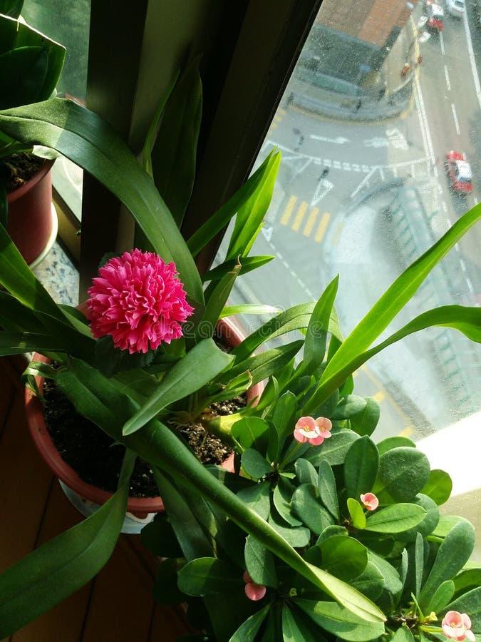 fałszywy kwiat zdjęcia royalty free