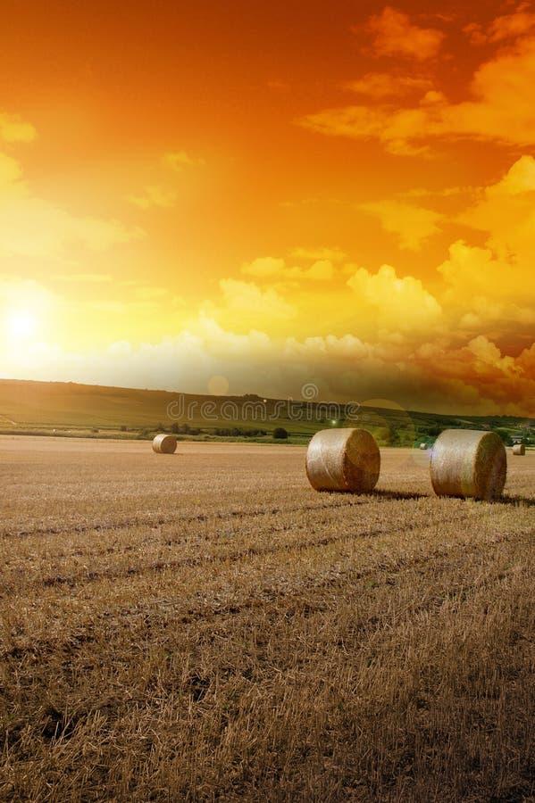 fa谷物收获了黄色 免版税库存图片
