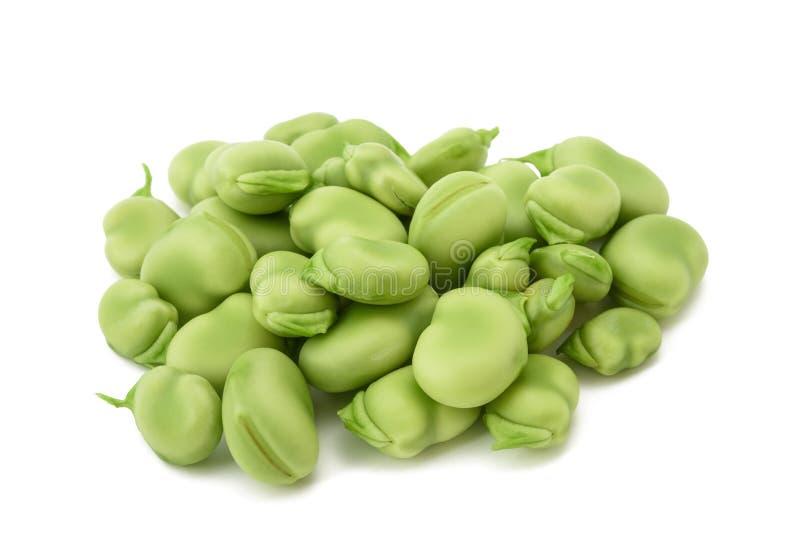 Faba de vicia de fève image stock