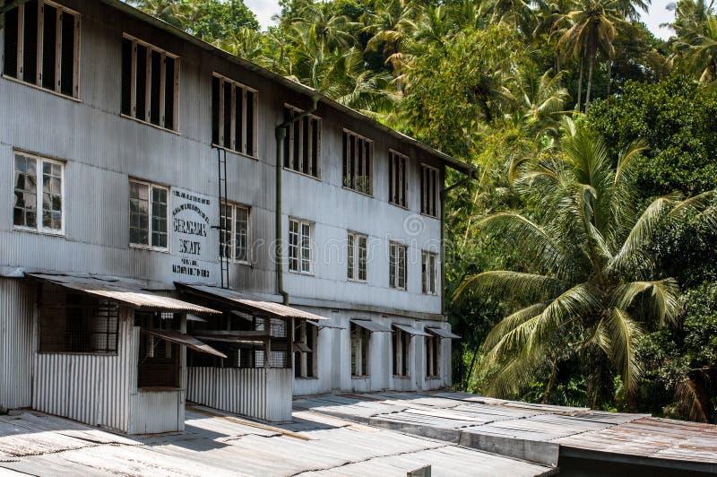 Fabbrica del tè, proprietà di geragama Lo Sri Lanka, Kandy fotografie stock
