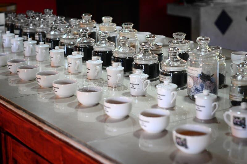 Fabbrica del tè, proprietà di handunugoda Lo Sri Lanka, Ahangama immagini stock libere da diritti