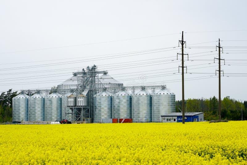 Fabbrica moderna del mulino del grano dietro un campo di fioritura della violenza fotografia stock