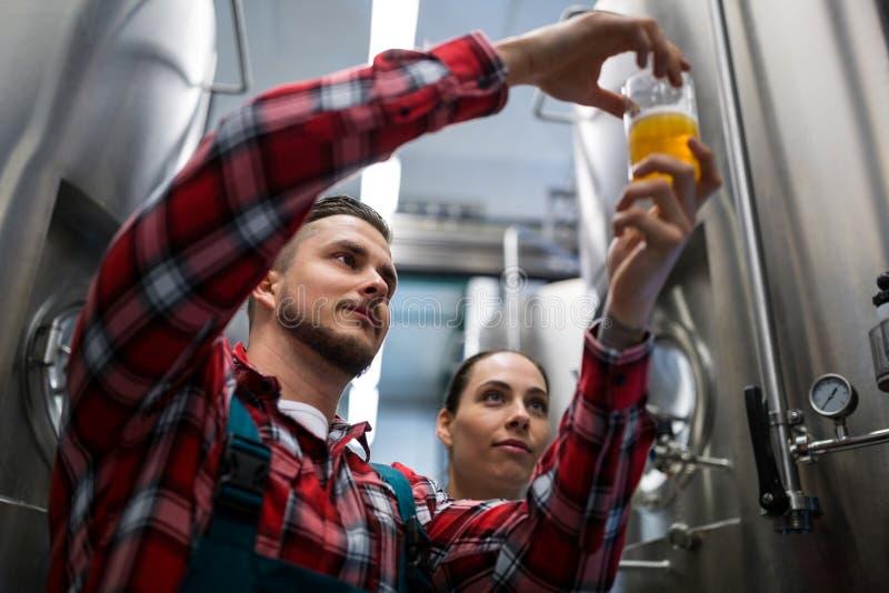 Fabbricanti di birra che provano birra fotografia stock