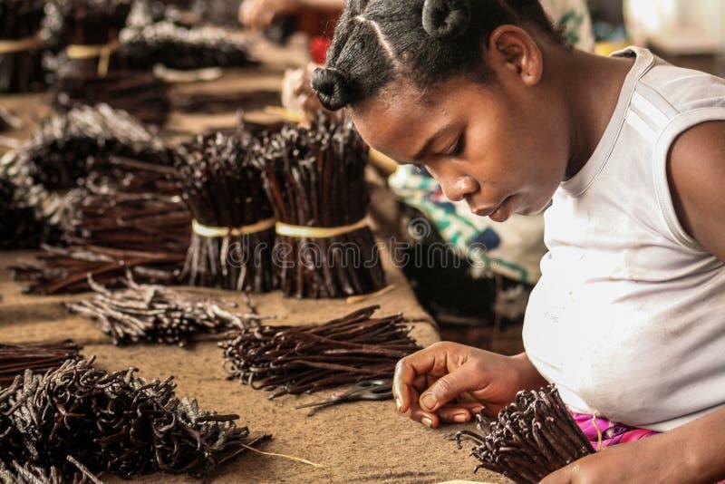 Fabbricazione di vaniglia fotografia stock libera da diritti