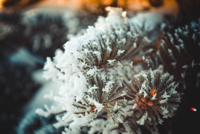 Fabelhafter Baum bedeckt mit Frost stockfotografie