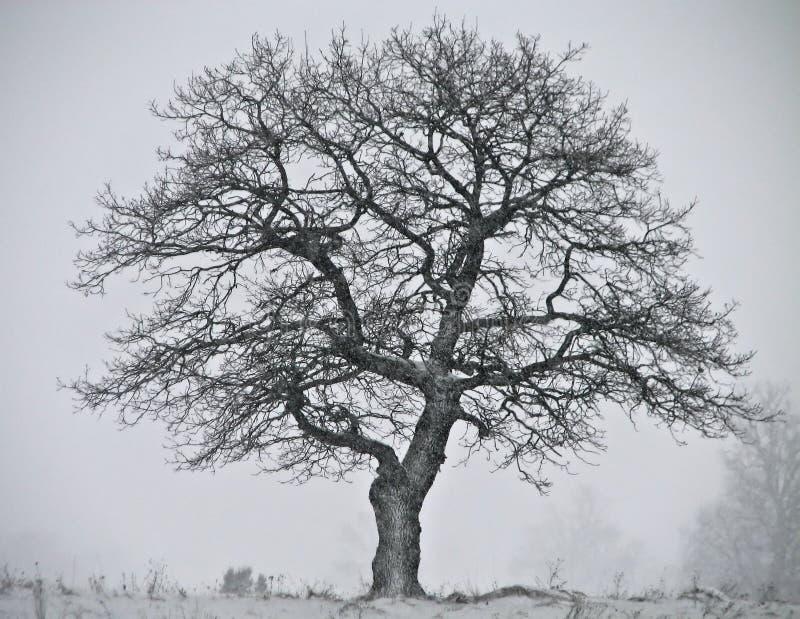 Fabelhafter Winterbaum lizenzfreie stockfotografie