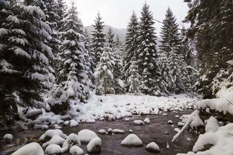 Fabelhafter Winterwald und Fluss, Schnee bedeckt lizenzfreie stockfotos