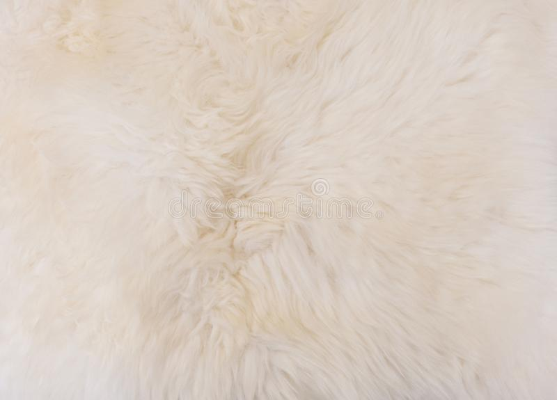 Popular Detail Of White Fluffy Wool Texture Background Stock Photo - Image  RE48