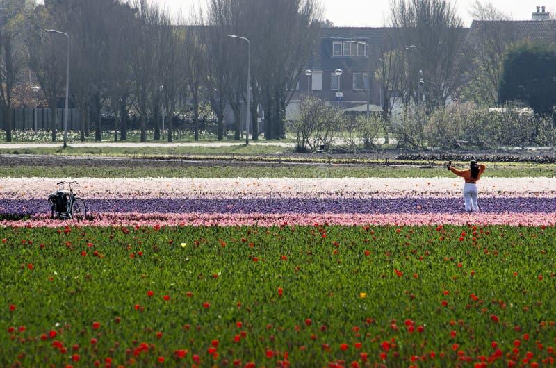 Fabricación de selfies en un campo de flor imágenes de archivo libres de regalías