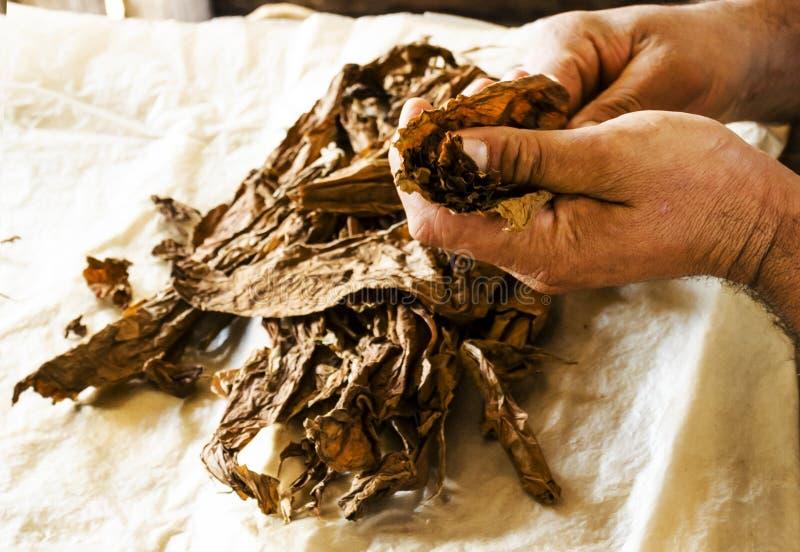 Fabricación tradicional de cigarros cubanos en Cuba imagen de archivo libre de regalías