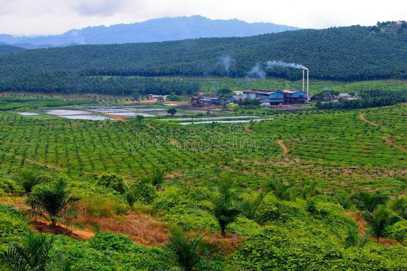 fabriken mal olja gömma i handflatan fotografering för bildbyråer