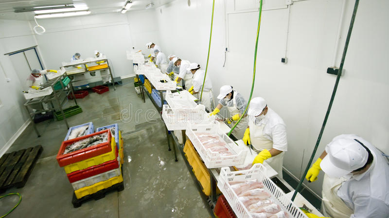 fabryczny rybi jedzenie zdjęcie royalty free
