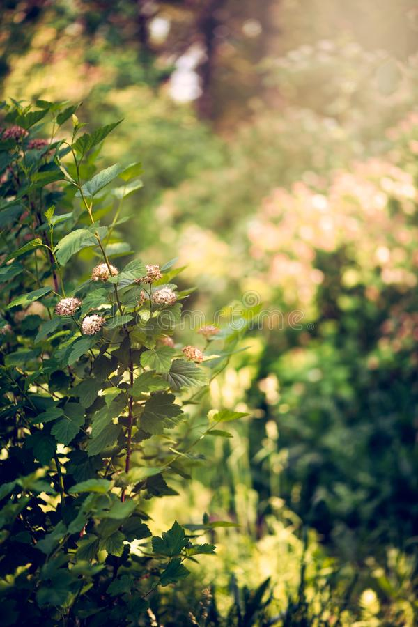Fabulous background bushes and trees in the forest, blurred texture view royalty free stock photo