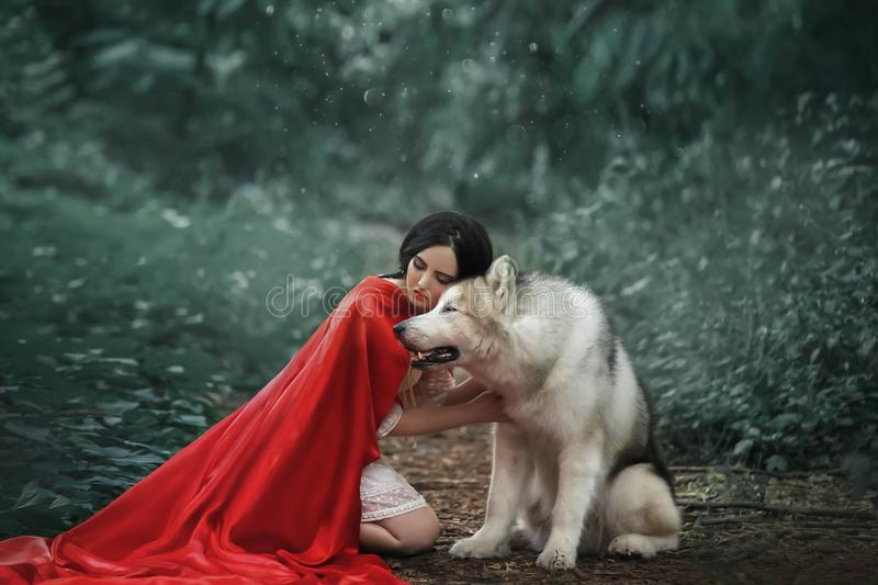 Fabulous image, dark-haired brunette attractive lady in short white dress, long red scarlet cloak lying on ground sits. Beside Alaskan Malamute like wolf stock image