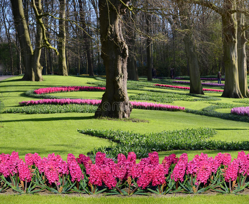 Fabulous spring landscape with hyacinth flowers in the park Keukenhof, Holland royalty free stock photos