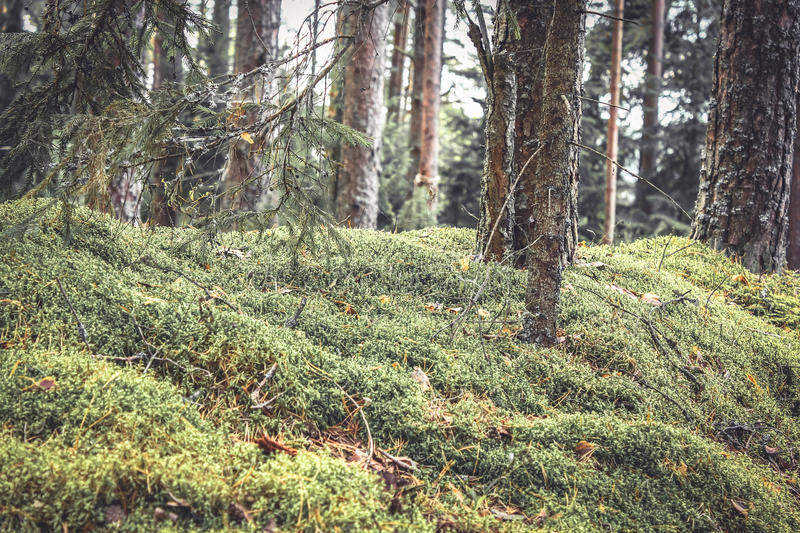 Fabulous thickets in mysterious forest with twigs covered with moss and grass in vintage colors stock images