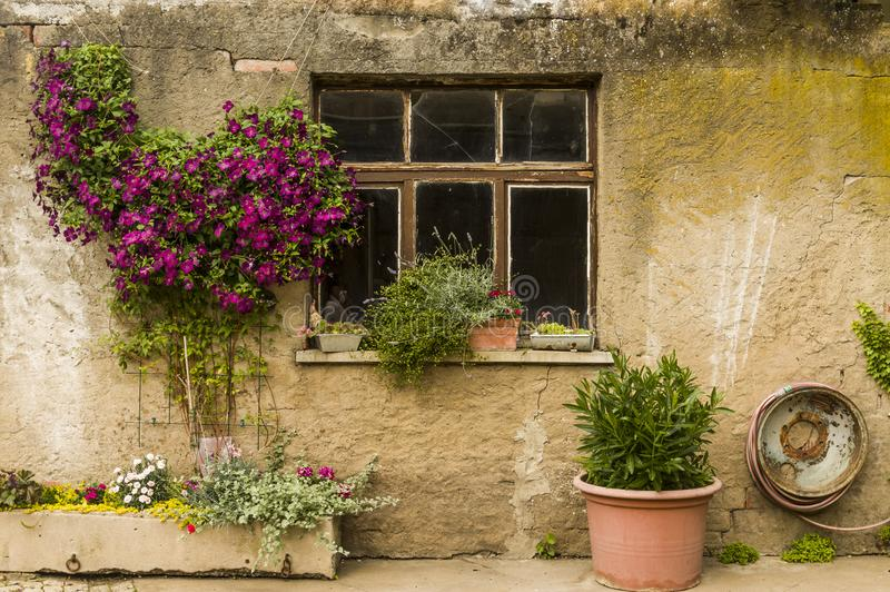 Facade cutting farmhouse workshop with a lot of flower arrangements royalty free stock photography