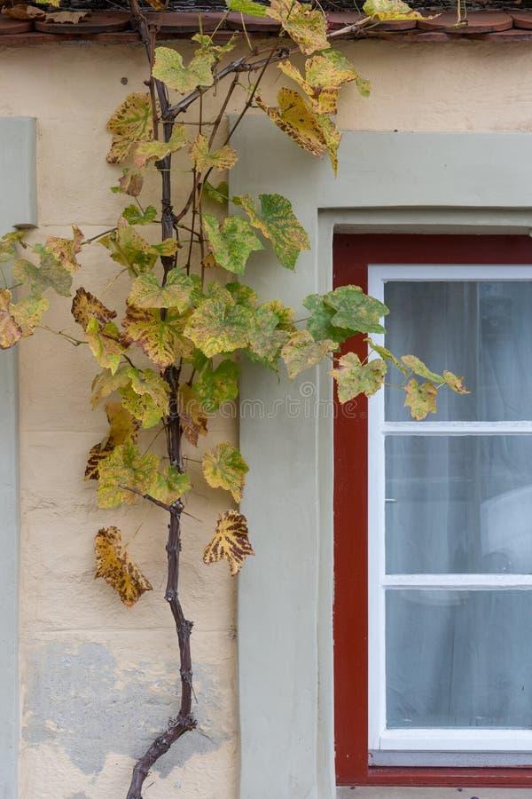 facade flower in autumn stock photos