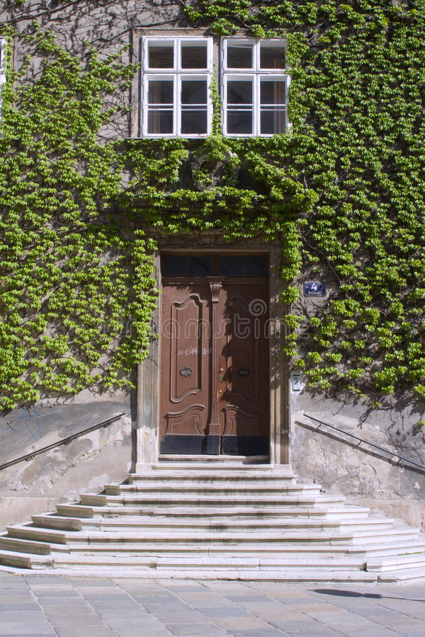 Facade in ivy royalty free stock photography