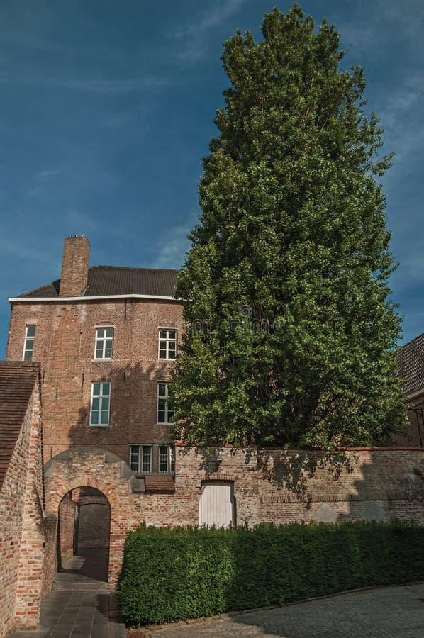 Facciata del mattone della casa, dell'albero e del cielo blu in un cortile pacifico a Bruges fotografia stock libera da diritti