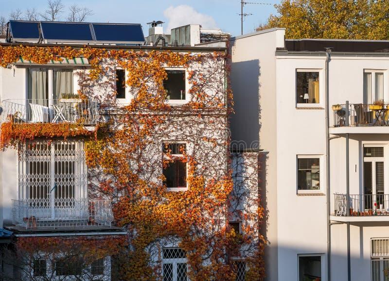 Facciata della casa residenziale, invasa con le piante rampicanti rosso-gialle luminose immagini stock libere da diritti