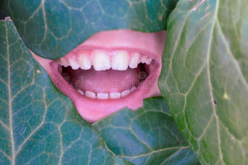 The face of an angle covered by green leaves royalty free stock photography