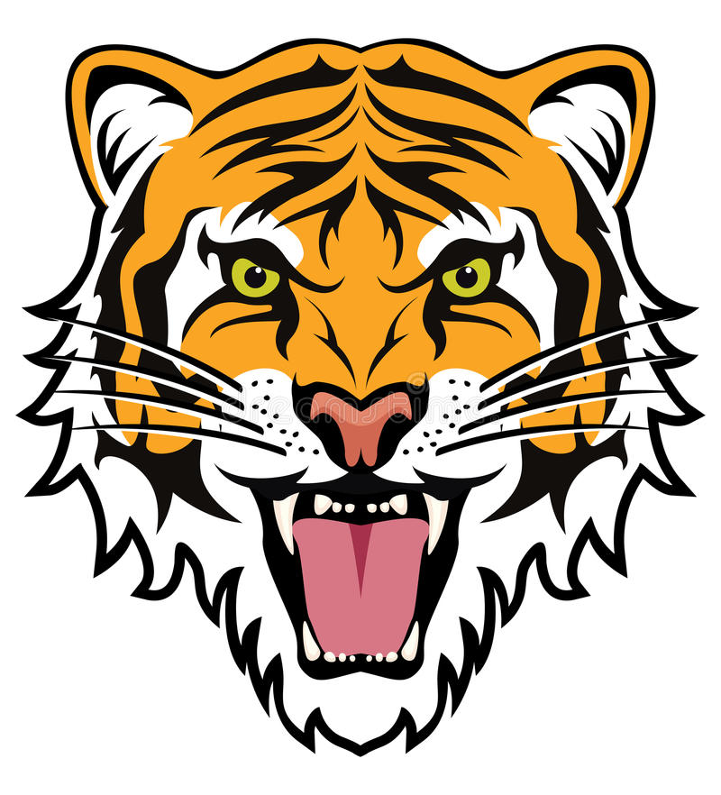 face of angry tiger vector stock vector illustration of face