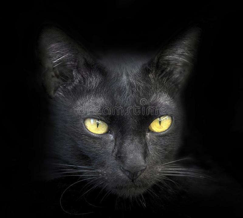 The face of a black cat. The face of a black cat on a black background stock photography