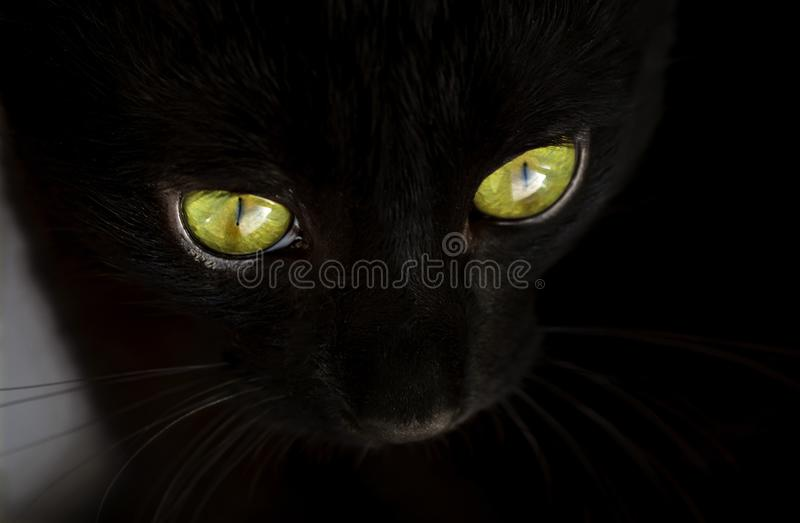 Face of a black cat with green eyes close-up. Selective focus. Shallow DOF royalty free stock photography