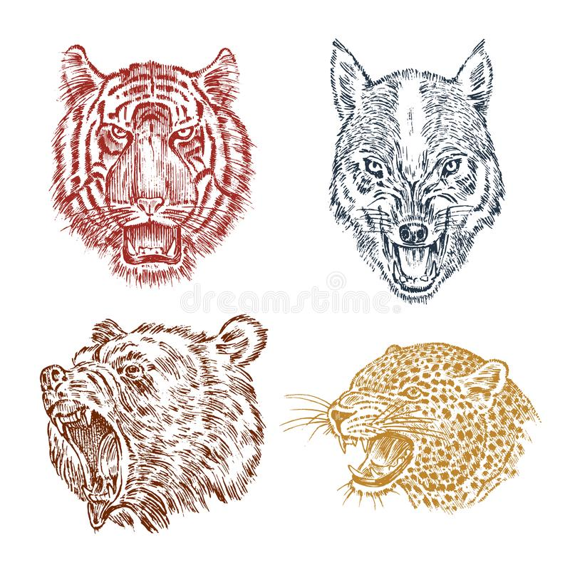 The face of brown grizzly bear, leopard and jaguar. Portrait of the wolf. Jaws of the tiger. Head of wild animal. Angry stock illustration