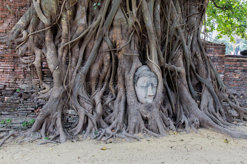 Face of Buddha in a Banyan Tree royalty free stock photography