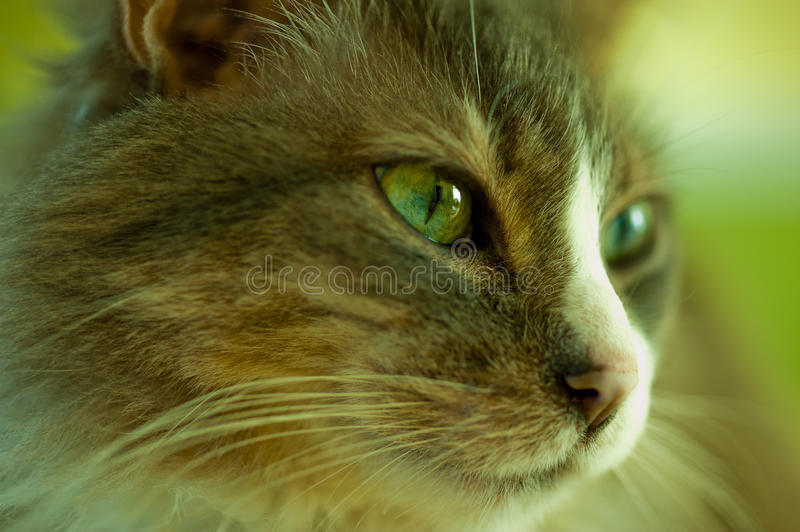 Download Face Of Cat Royalty Free Stock Photo - Image: 19762605