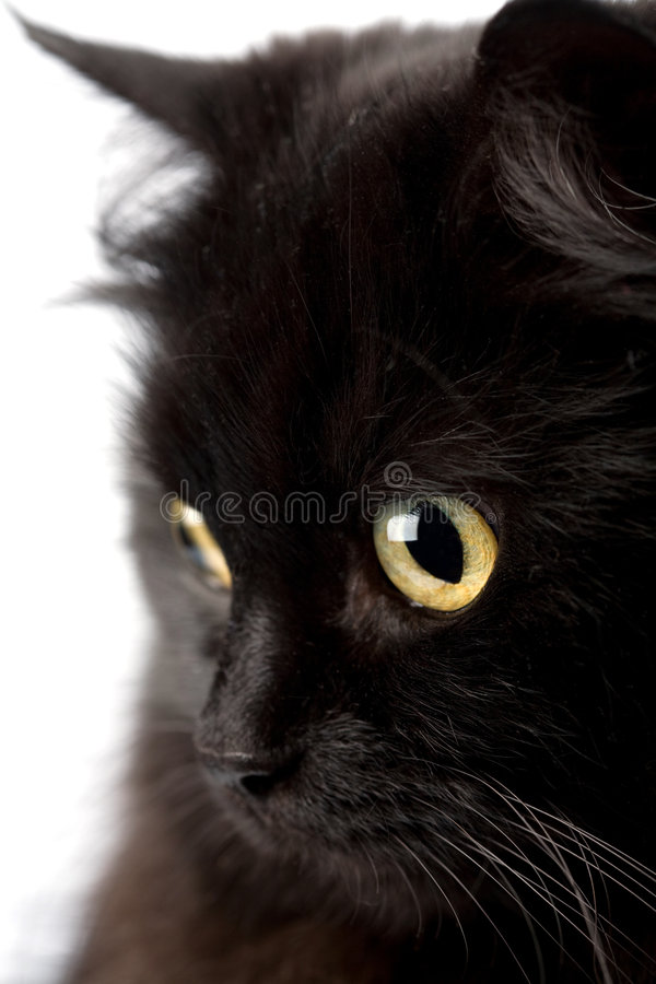 Face of cute black cat. Isolated stock images