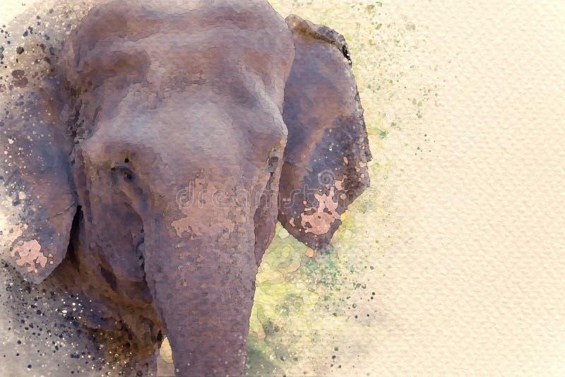 Face d'éléphant asiatique en forêt photo libre de droits
