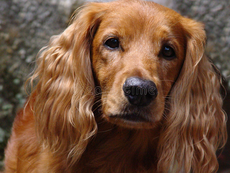 Face do cão imagem de stock