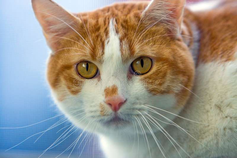 Face do gato fotos de stock