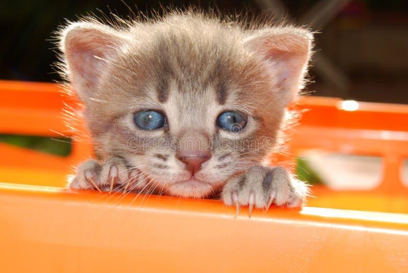 Face do gato pequeno foto de stock