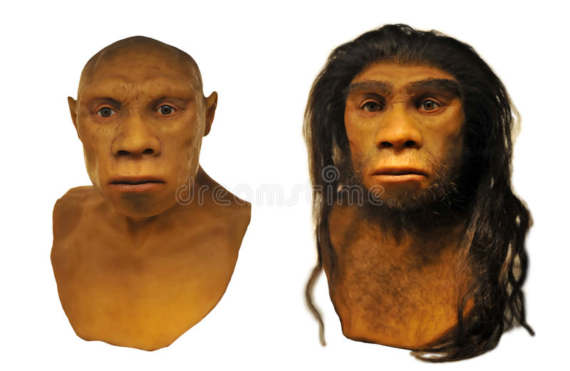 Face do homem de Neanderthal fotografia de stock royalty free