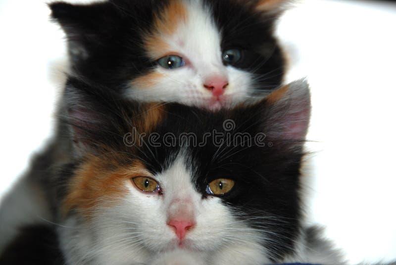 Cara dos gatos fotos de stock royalty free