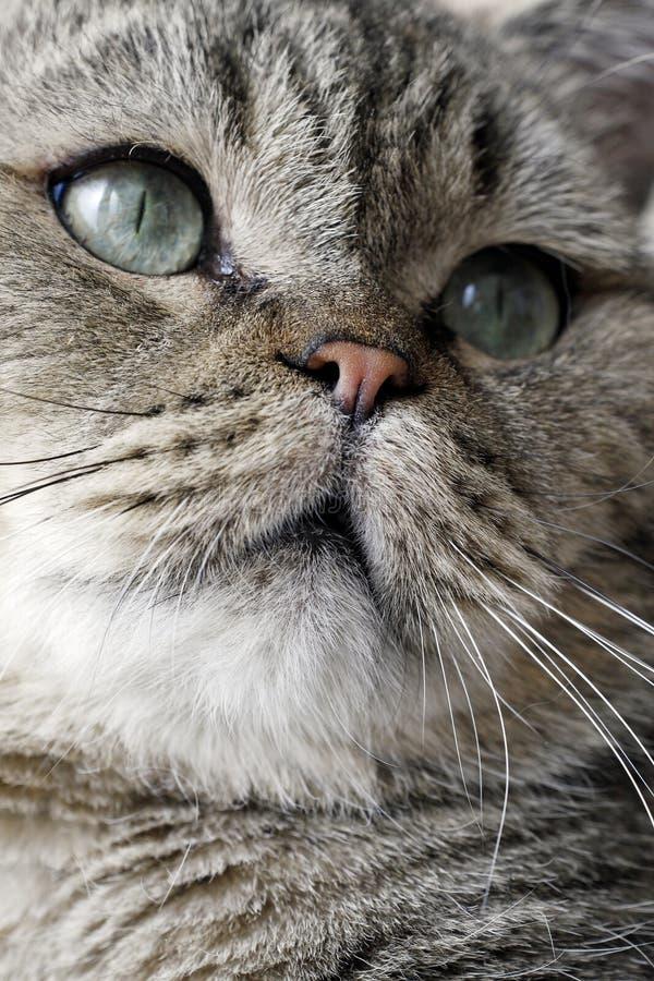 Face encantadora do gato. imagens de stock
