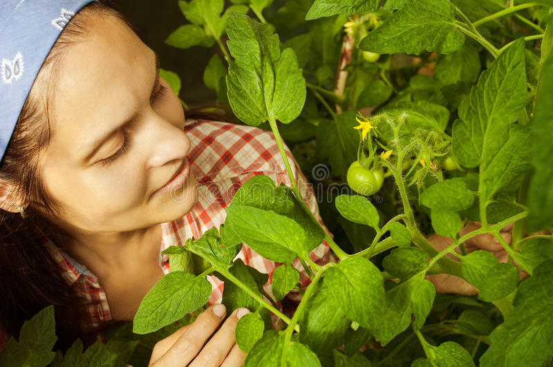 Young girl looking at a bush with green tomatoes royalty free stock photo