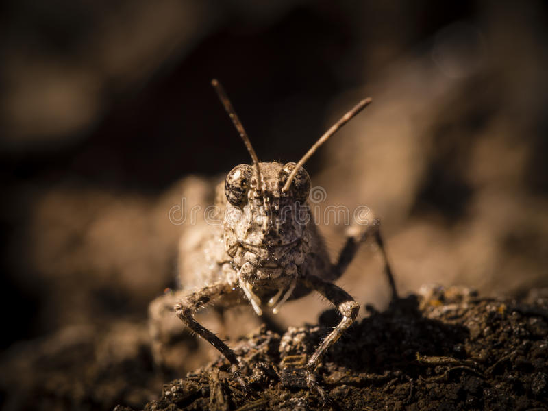Face of insect grasshopper stock photo