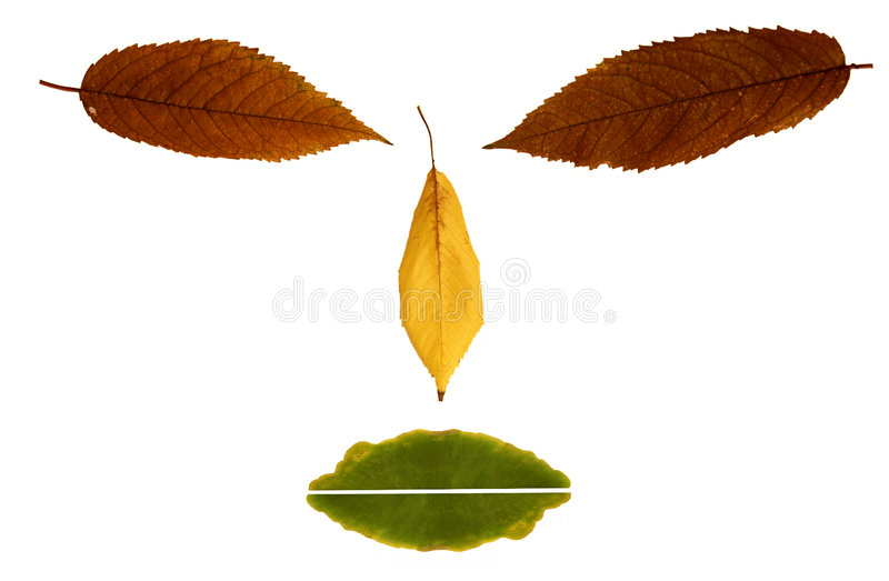 Face Of Leafs stock photography